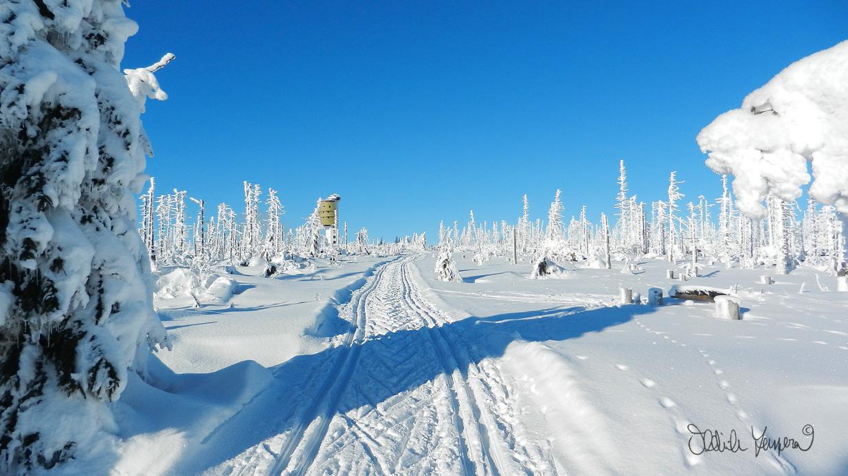 Milosrdná zima a její čerstvý sníh udělají i z měsíční krajiny mrtvých stromů na Poledníku parádní podívanou a vyšplhat nahoru na běžkách patří k povinnosti každého Šumaváka alespoň jednou v roce ;-)